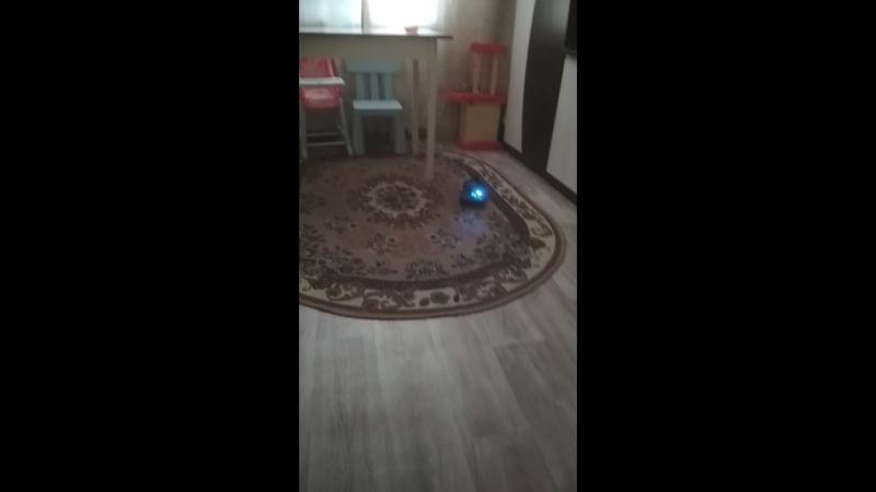 Собака против танка