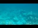 Мальдивы подводный мир1