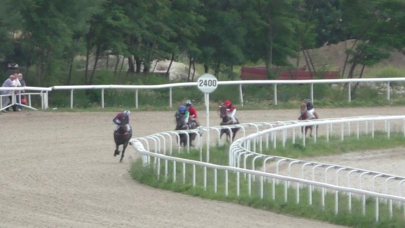 17.06.2018 - Летний приз на лошадях 2-х лет ахалтекинской породы - Оберег