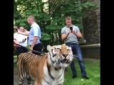 Конор с тигром