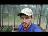 Выращивание огурцов в парнике в защищенном грунте / Все секреты и хитрости в одном видео