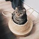 Коты — неплохая единица измерения! Например…