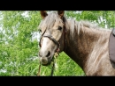 Жизнь на Заставе глазами лошади Феррари