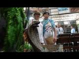 Таиланд. Паттайя. Змеиная ферма (петушиный бой, шоу со змеями).