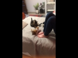 Порнуха кота