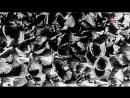 Без срока давности, Травники- школа палачей, 2015 год документальный качество Full
