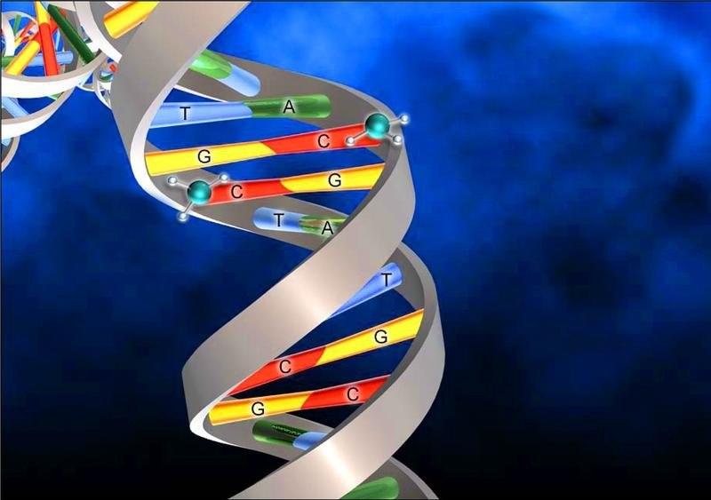 Эпигенетика: мутации без изменения ДНК