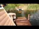 Запускаем лебедей в озеро парка 30 летия ВЛКСМ