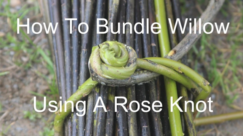How to bundle willow using a rose knot