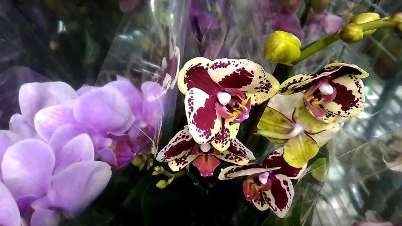 Орхидеи в Леруа Мерлен 20 05 18