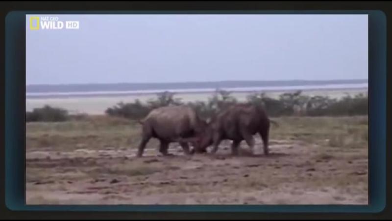 Кровная вражда животных Познавательный фильм
