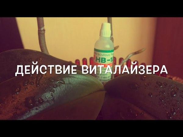 ДЕЙСТВИЕ ВИТАЛАЙЗЕРА на ОРХИДЕИ ✨🌱✨ Action Vitalizer on orchid
