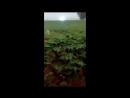 Это стоит увидеть! Шаровая молния снята на камеру. Странное явление природы (перезалив).mp4