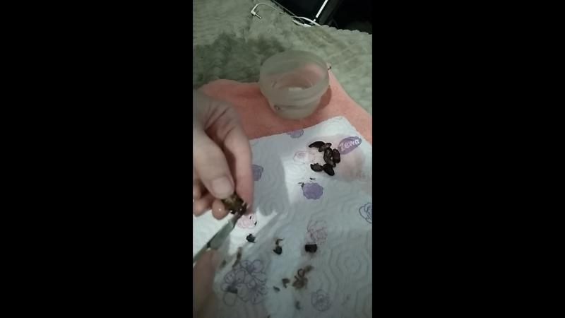 подготовка кормовых тараканов