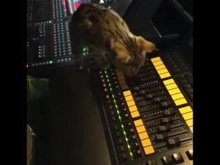 Кот против моторизованных фейдеров