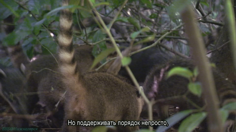 BBC «Жизнь (03). Млекопитающие» (Познавательный, природа, животные, 2009)