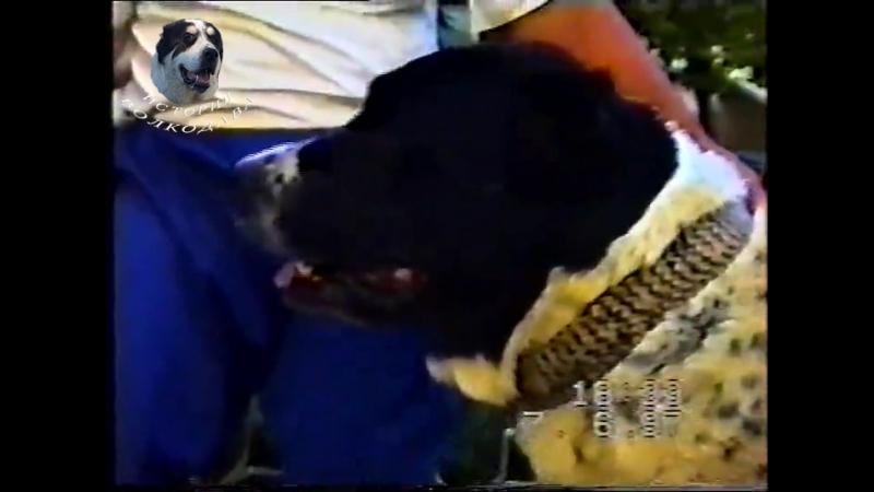 Кара-Тохмет (Черная-Смерть) Чемпион Туркменистана 1992-1993 г.
