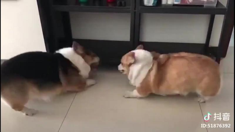 Мохнатые буханки ссорятся 🐶 Furry loaves quarrel