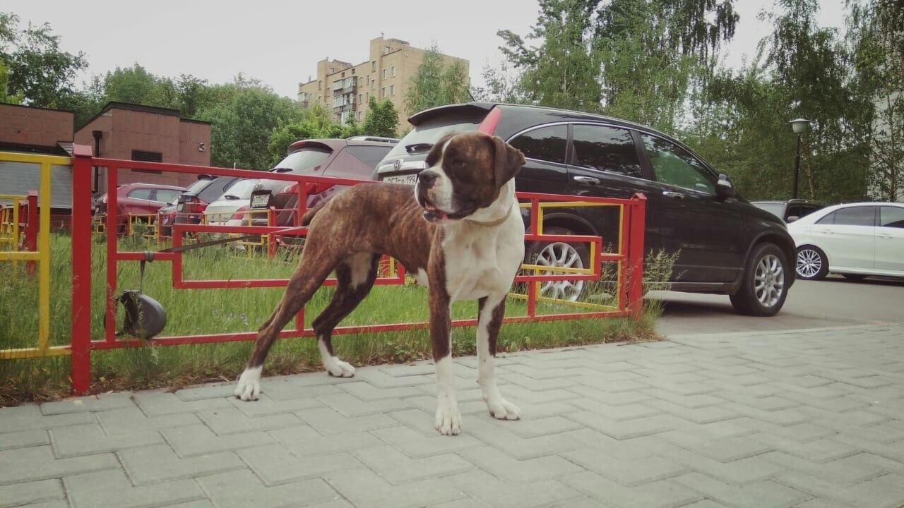 Москва, Вассаби, сука, 22.09.2016. 1Wfd1DkUDvM