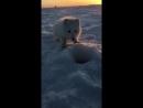 Песец на рыбалке VHS Video