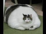 Приколы с кошками и котами #4. Подборка смешных и интересных видео с котиками и кошечками ПРИКОЛИЗМ 34 млн просмотров 50+ Микс