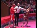 Kangaroo vs Boxer Бои без правил Кенгуру против кикбоксера