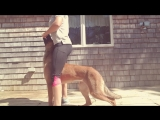 AxiaK9 - How to Teach your Dog to heel between your legs