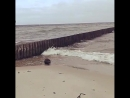 НАБЛЮДАЙ Вот такого гостя на Зеленоградском пляже встретили мы с @ alinazherbina сегодня утром Жаль у меня телефон вырубился