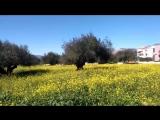 жёлтые краски февральского дня на острове Кефалония! 16.02.2018