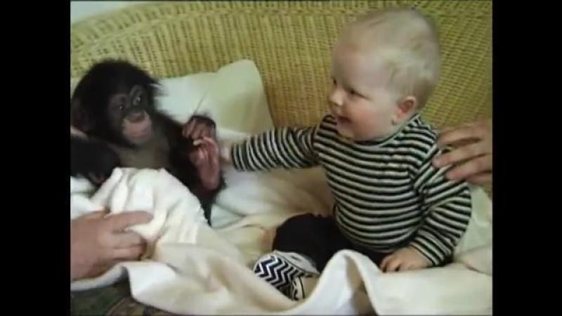 Who is monkey Chimpanzee vs baby