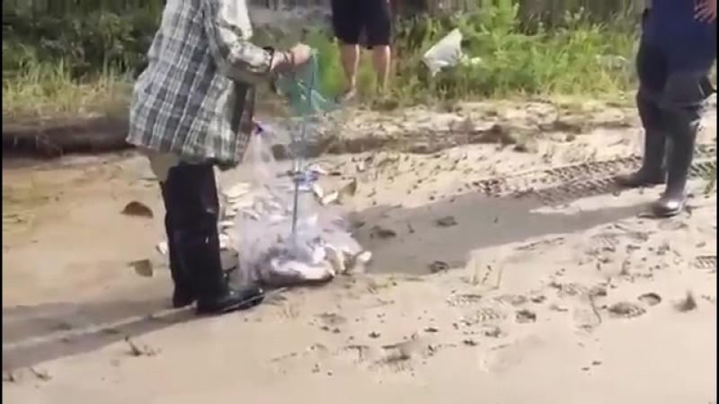 В Якутии рыбу ловят кастинговой сетью