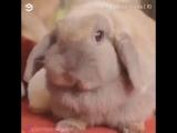 Эти_милые_создания_-_кролики.mp4