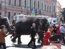 По улицам слонов водили-2018