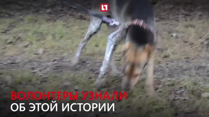 Хозяин поджёг пса ради веселья 16