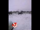а вот наши лошадки гуляют