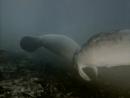 1971 Последние сирены Подводная одиссея команды Кусто
