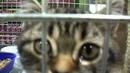 Такой няшный котик сидит в клетке
