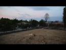 Напряженная обстановка в Саванне львицы знакомятся с грозным Ричардом Тайган