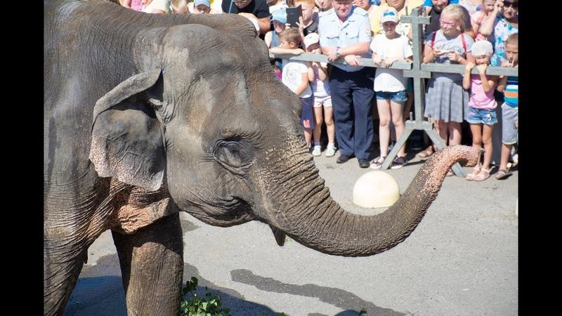 По улицам слона водили, как видно напоказ...