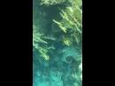 Египет,Шарм Эль Шейх, Красное море-подводный мир изумительный я в восторге