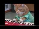 кот пианист мертв. вечная память ..