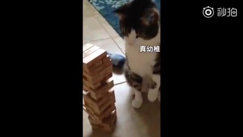 主人跟猫咪玩叠叠乐抽积木的小游戏。猫主子全程一脸不屑
