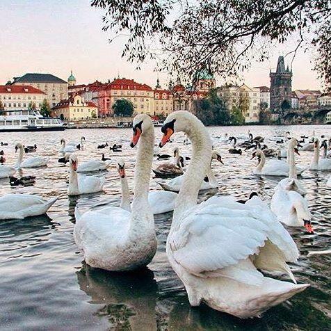Екатеринбург: тур в Прагу на неделю с завтраками за 14700 c человека