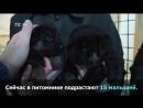 Собачки УФСИНа