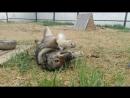 Хана, приют для собак Жил-был Пёс, г.Иркутск