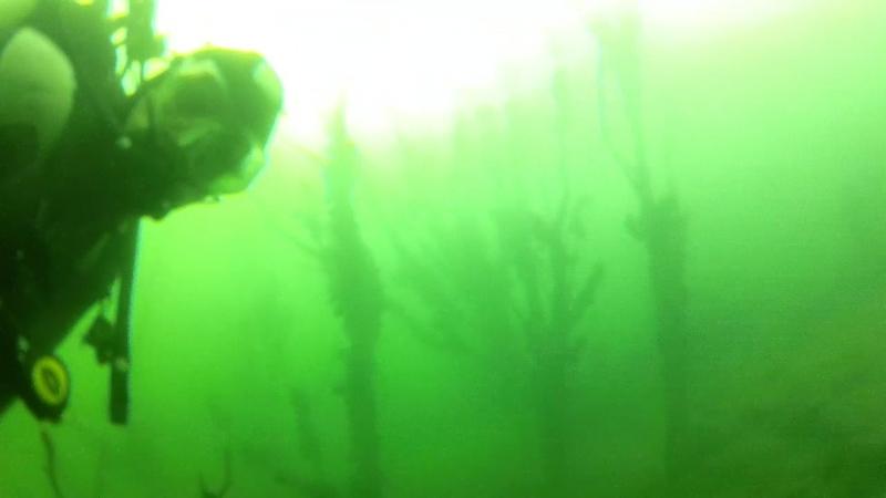 Клуб подводного плавания Морские Ангелы