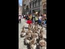 Шествие гусиного оркестра на улицах Брюгге