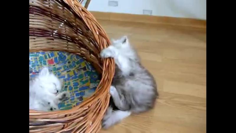Неуклюжий котенок