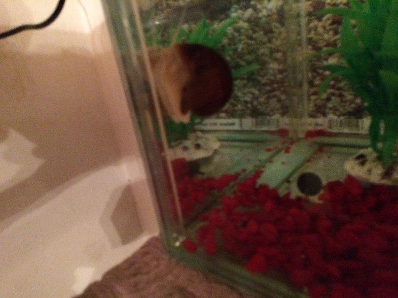 аквариумные рыбки в шымкенте