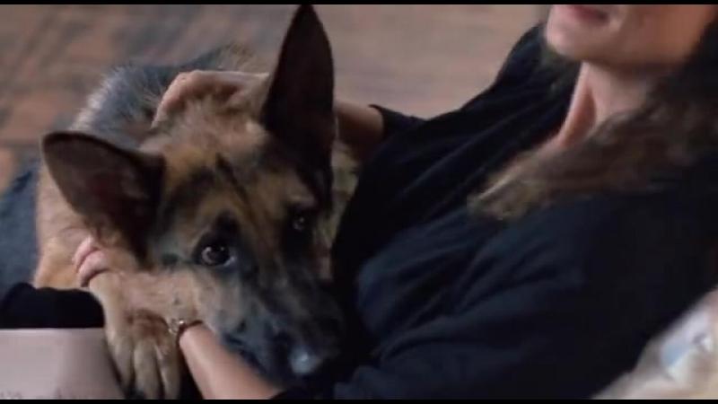 K-9 Собачья работа 1989